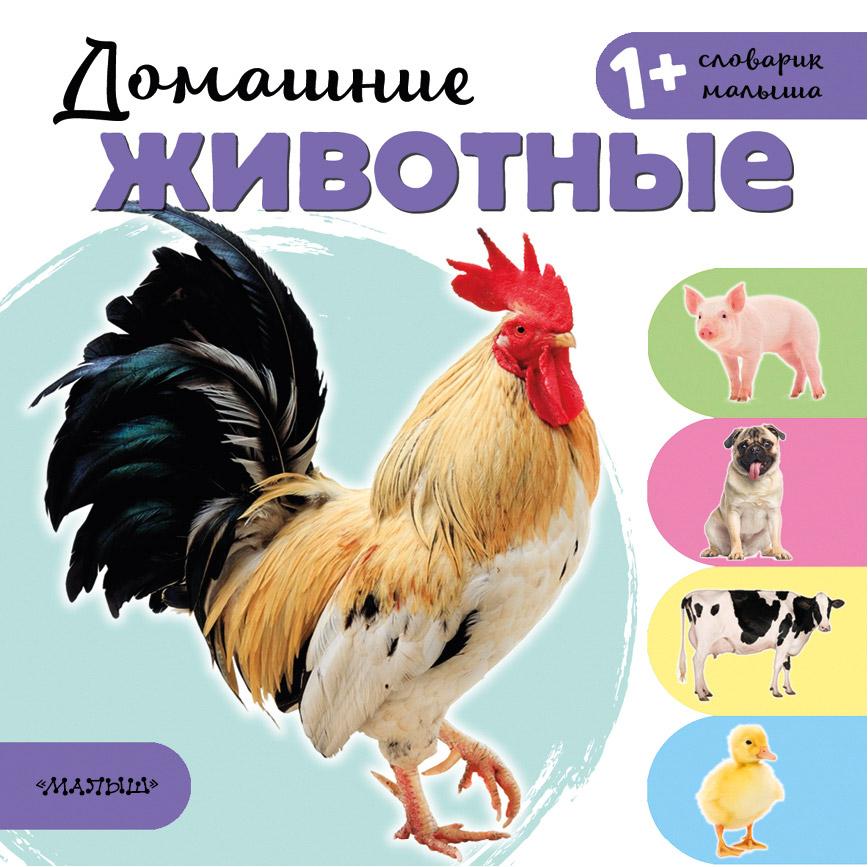 Книга АСТ Домашние животные недорого