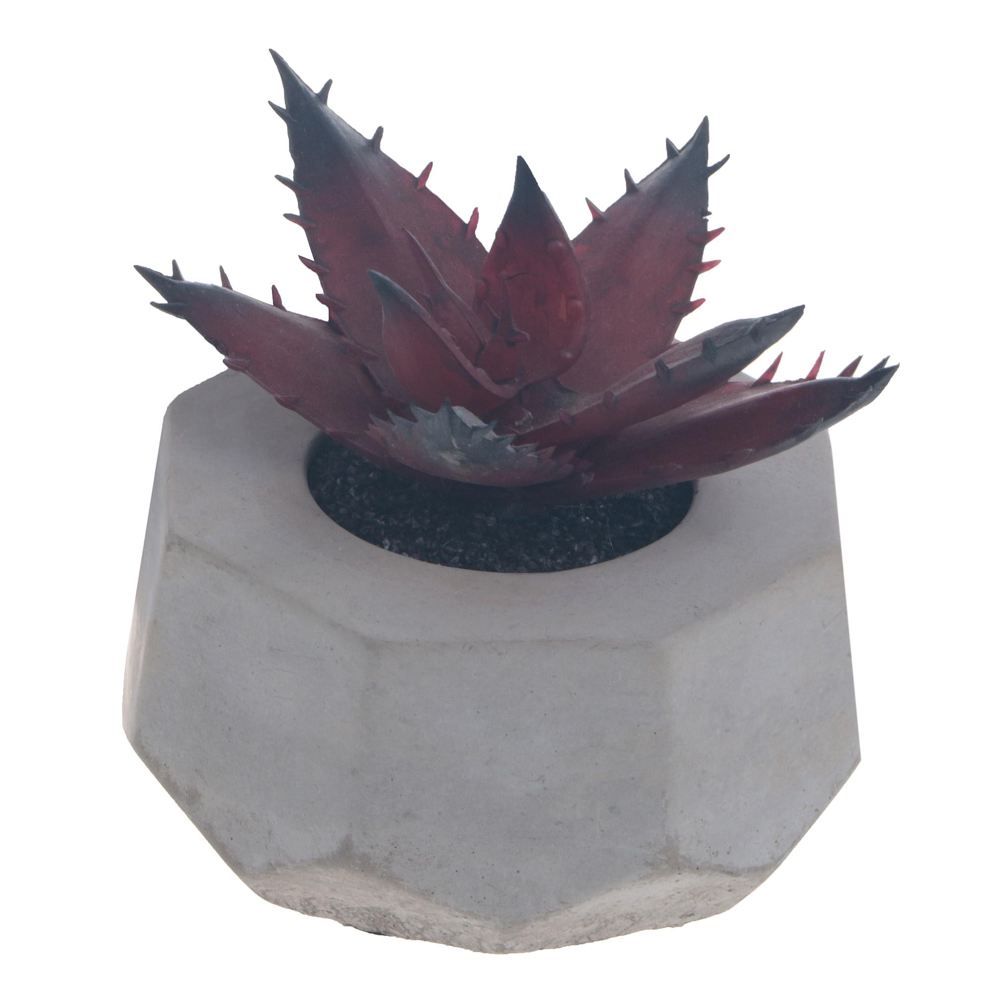 Фото - Декоративный суккулент в сером горшке d. 8 cm Asa selection декоративный суккулент в сером горшке d 8 cm asa selection