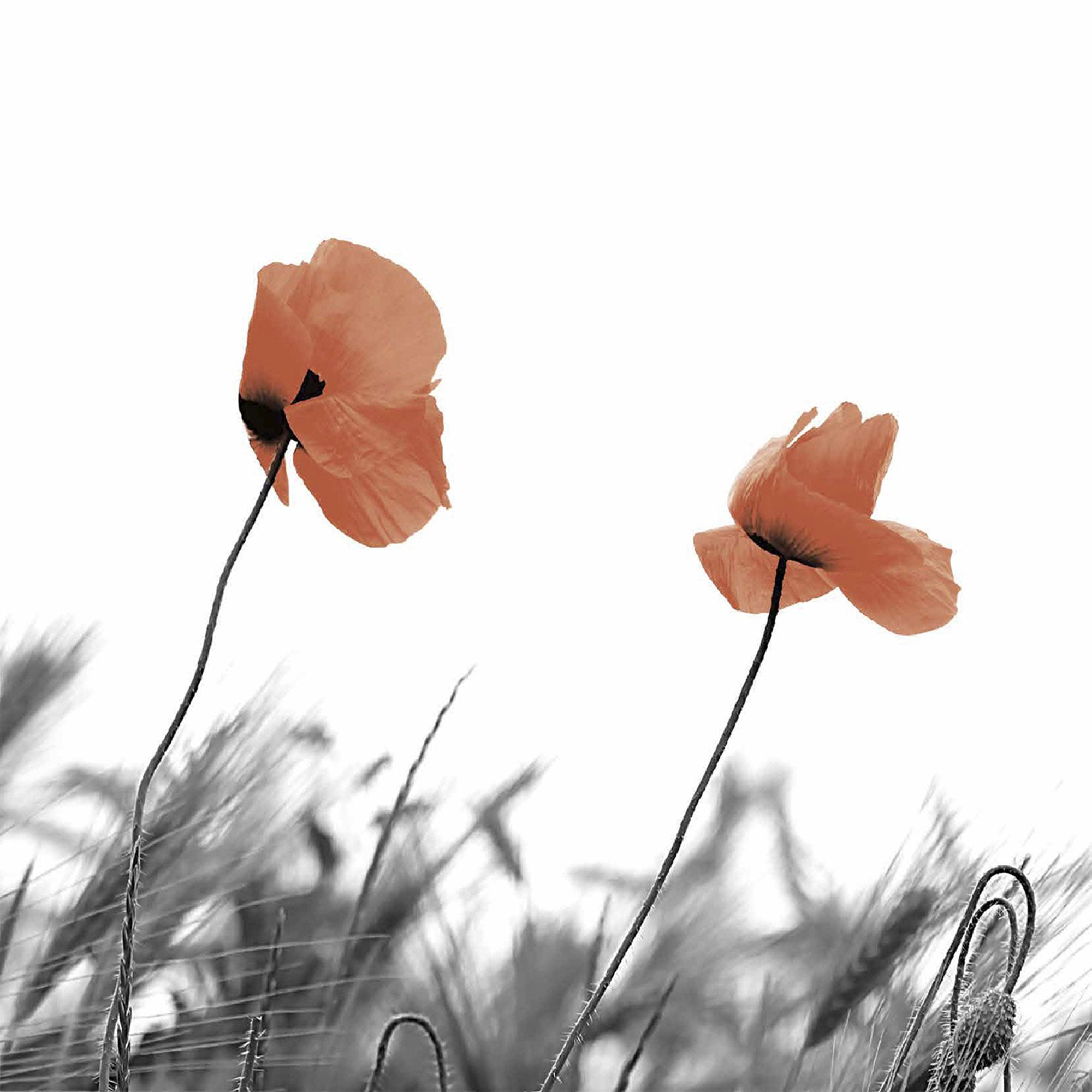 Салфетки Paper+Design Two poppies 3-сл 33х33 см 20 шт