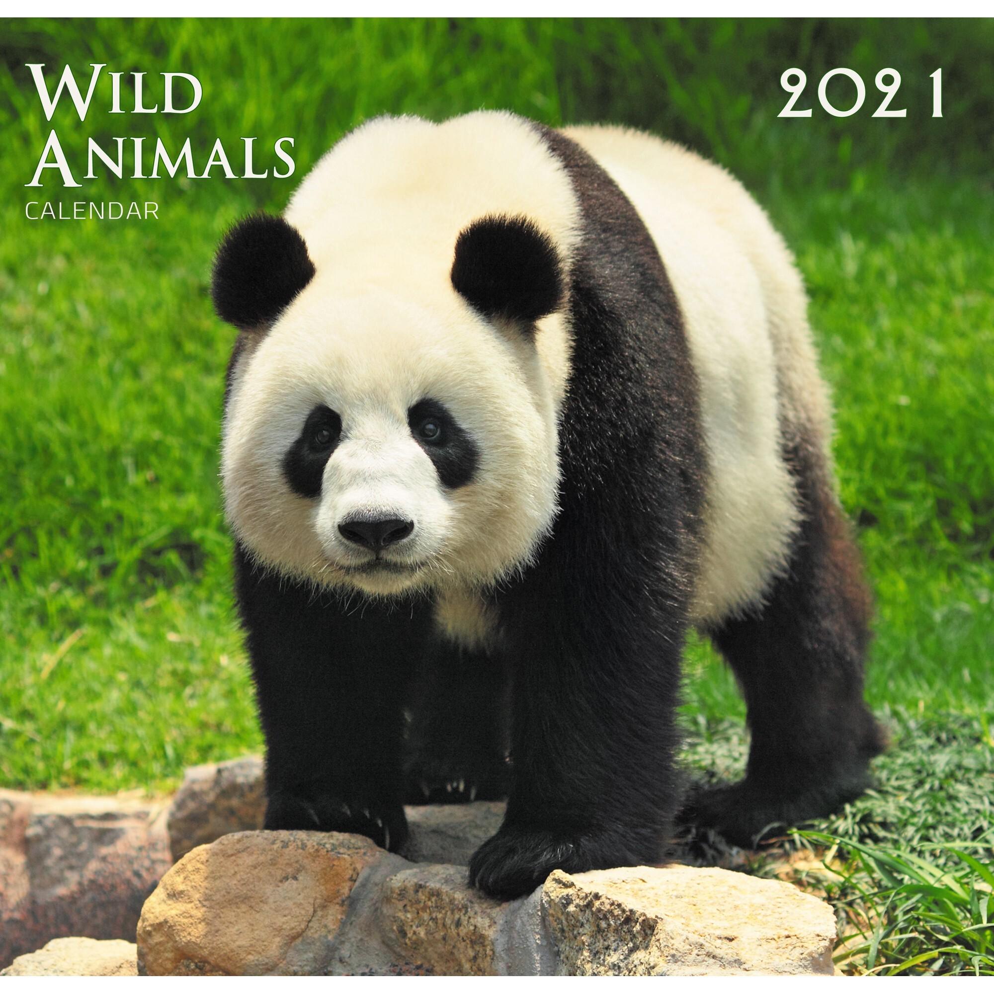 Календарь настенный перекидной Дикие животные (дизайн 2) на 2021 год.