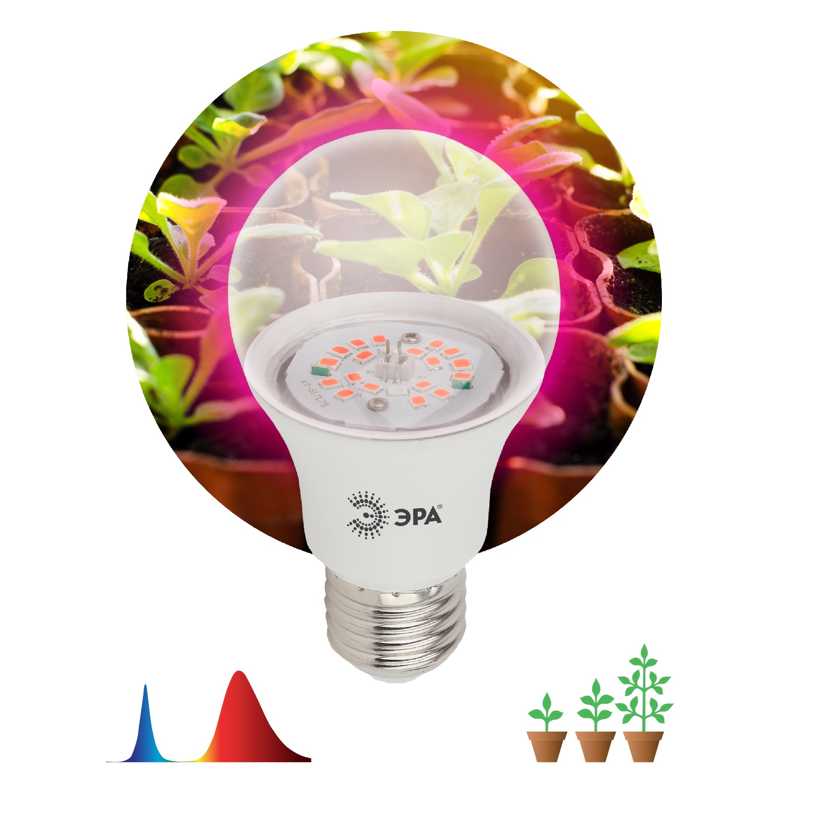 Лампа красно-синего спектра Эра FITO-10W-RB-E27-K недорого